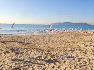 海の写真・画像素材[529179]