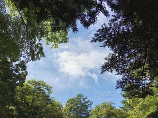 夏の写真・画像素材[530640]