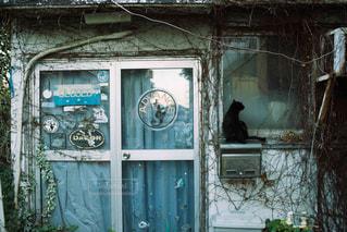 猫の写真・画像素材[527521]