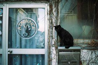 猫の写真・画像素材[527523]