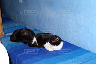 猫の写真・画像素材[525569]