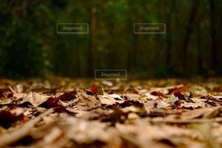 自然の写真・画像素材[105264]
