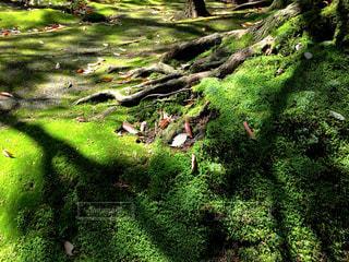 自然の写真・画像素材[536203]