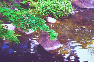 川辺の写真・画像素材[533851]