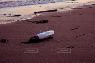 海辺の写真・画像素材[533888]
