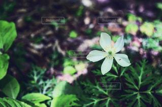 花の写真・画像素材[534464]