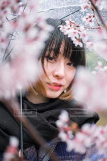 雨桜の写真・画像素材[1397258]