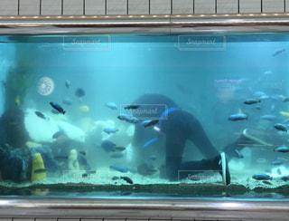 熱帯魚の写真・画像素材[528483]