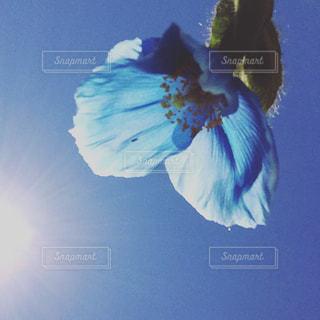 No.557874 青い花