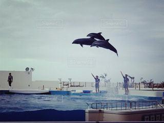 イルカの写真・画像素材[529689]