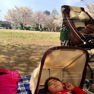 桜の木の下での写真・画像素材[1087505]