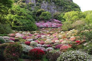 花の写真・画像素材[529069]