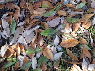 秋の写真・画像素材[692687]