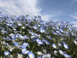 近くの花のアップの写真・画像素材[933566]