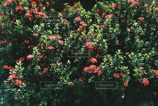 花の壁🌼の写真・画像素材[1456316]