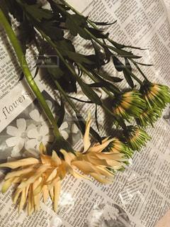 花束の写真・画像素材[1669682]