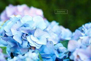 花の写真・画像素材[527614]