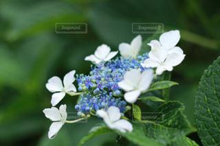 花の写真・画像素材[534209]
