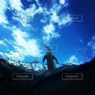 空の写真・画像素材[528004]