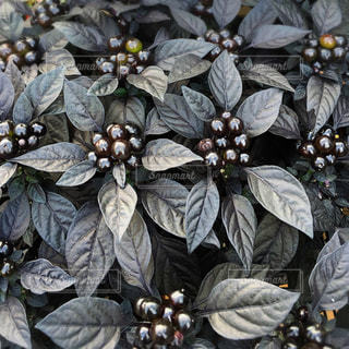 植物の写真・画像素材[533973]