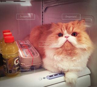 猫の写真・画像素材[558676]