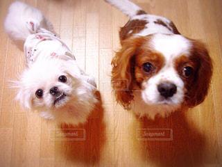 犬の写真・画像素材[563983]