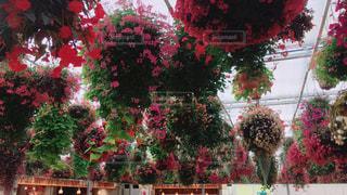 flowerの写真・画像素材[528057]