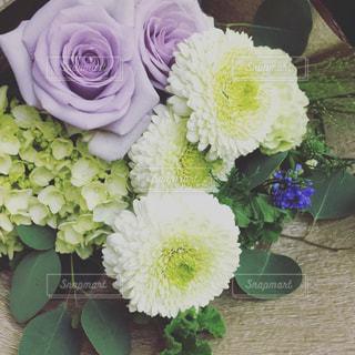 花束の写真・画像素材[536407]