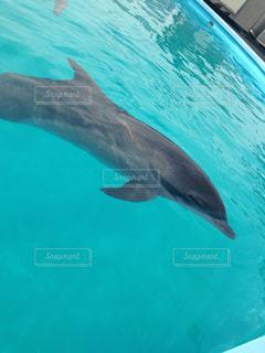 イルカの写真・画像素材[531121]