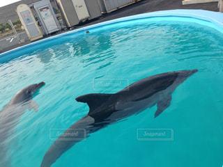 イルカの写真・画像素材[531122]