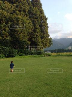 芝生 - No.530275
