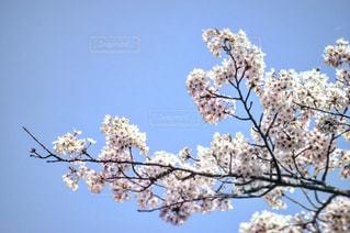 風景の写真・画像素材[528581]