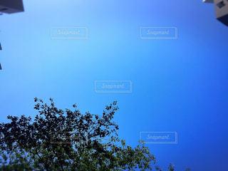 自然の写真・画像素材[534578]