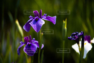 花の写真・画像素材[541383]