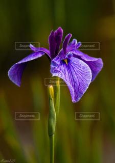 花の写真・画像素材[541384]