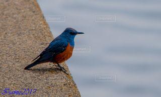 鳥 - No.547434