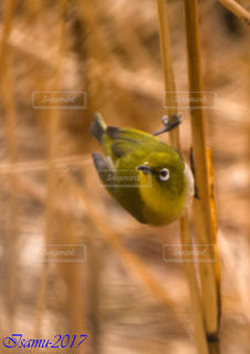 鳥 - No.547435