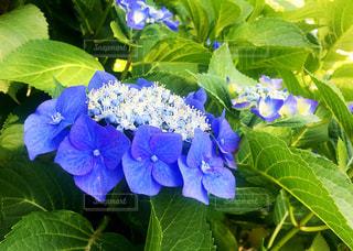 花の写真・画像素材[557259]