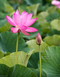 花の写真・画像素材[586485]