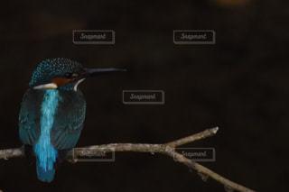 枝の写真・画像素材[530018]