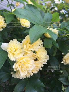 花の写真・画像素材[529934]