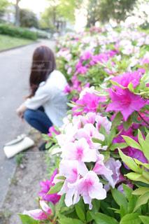 花 - No.530075