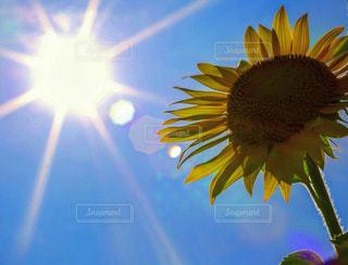 夏の写真・画像素材[530079]