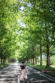 並木道を歩くの写真・画像素材[1315196]