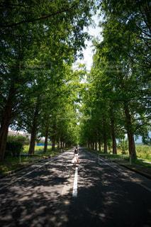 フォレスト内のツリーの写真・画像素材[1315197]