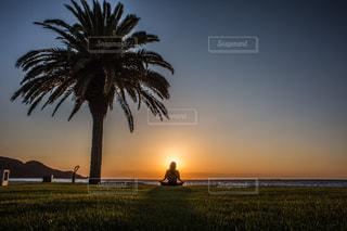 日没の前にヤシの木の写真・画像素材[1315285]