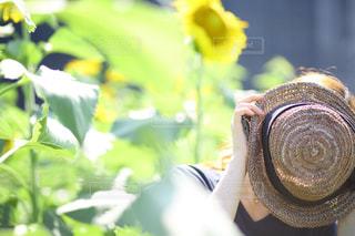 ヒマワリ畑でかくれんぼの写真・画像素材[1315289]