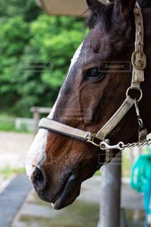 茶色のお馬さんの写真・画像素材[1315292]