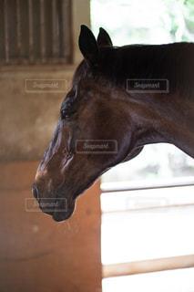 お馬さんこんにちはの写真・画像素材[1315293]