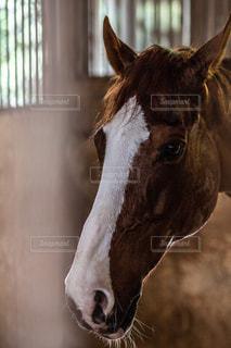 近くにカメラを見て馬のアップの写真・画像素材[1315294]